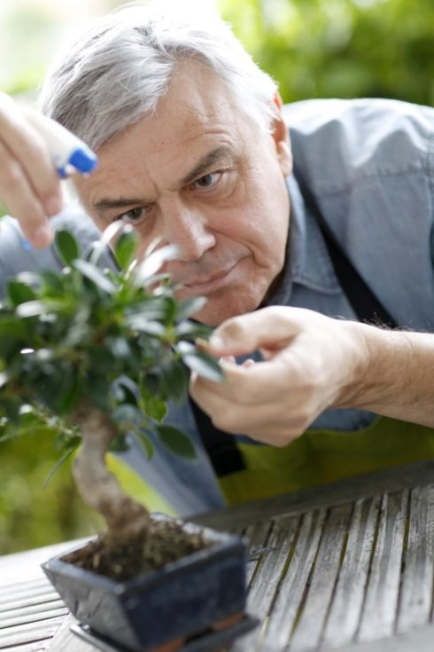 An old man gardener carefully sprayed water on bonsai plant