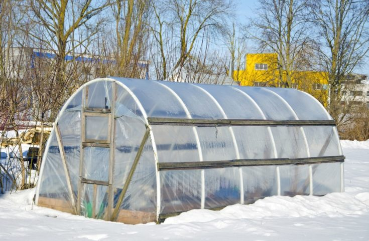 handmade polythene greenhouse for vegetable in winter time on snow
