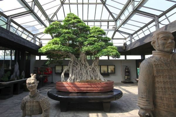 Two stone human stone sculpture with Bonsai Tree in the background center planted on a red large spherical vase inside the house