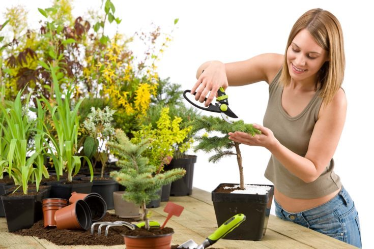 A woman trimming bonsai tree with prunning shears