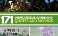 171 Inspirational Gardening Quotes And Sayings