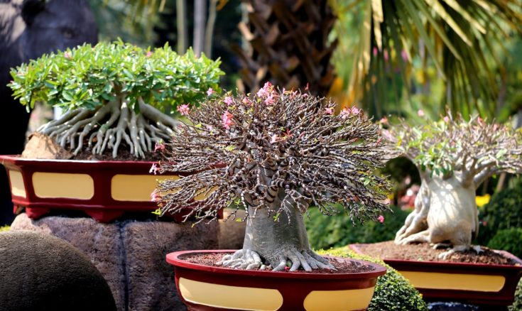 Photo beautiful amazing bonsai in the park