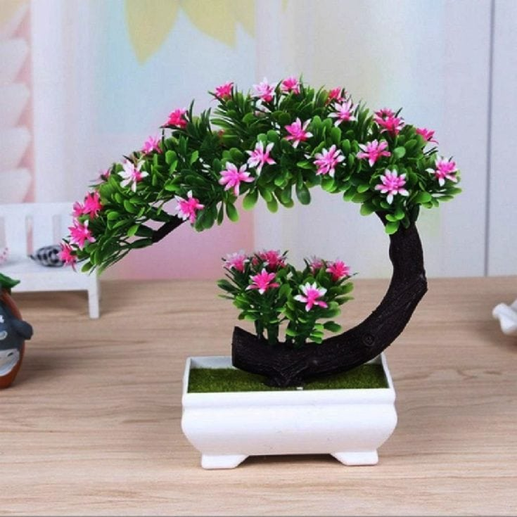 Curved trunk of pink flowering indoor bonsa tree planted in a cute little white rectangular pot