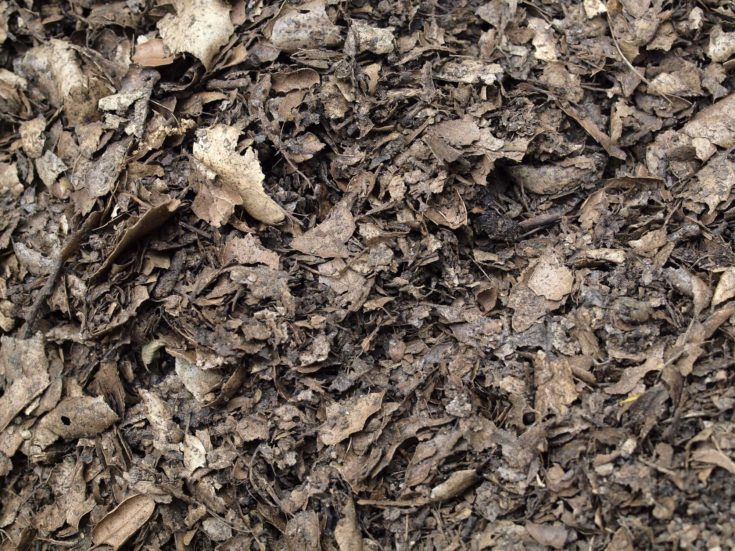 Leaf compost mulch pattern for background.