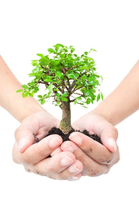 Hands holding a small bonsai tree