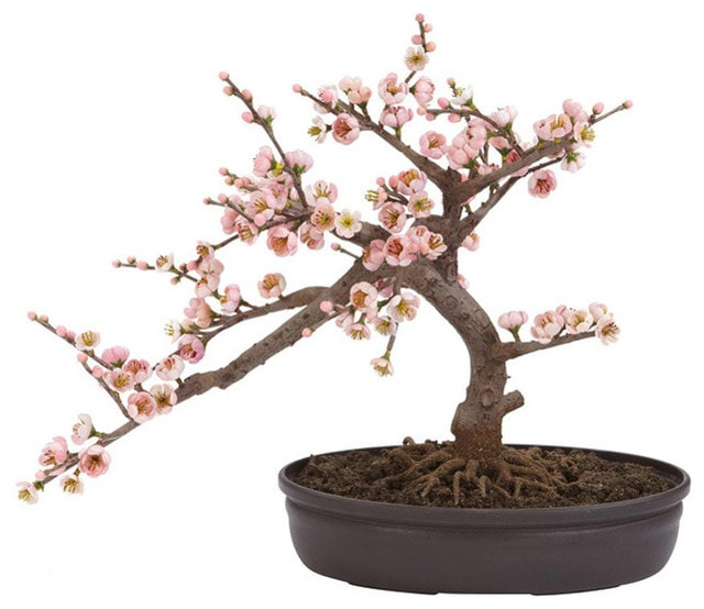 Slant direction of bonsai branch with several peach flowers blooming planted in a rounded modern pot