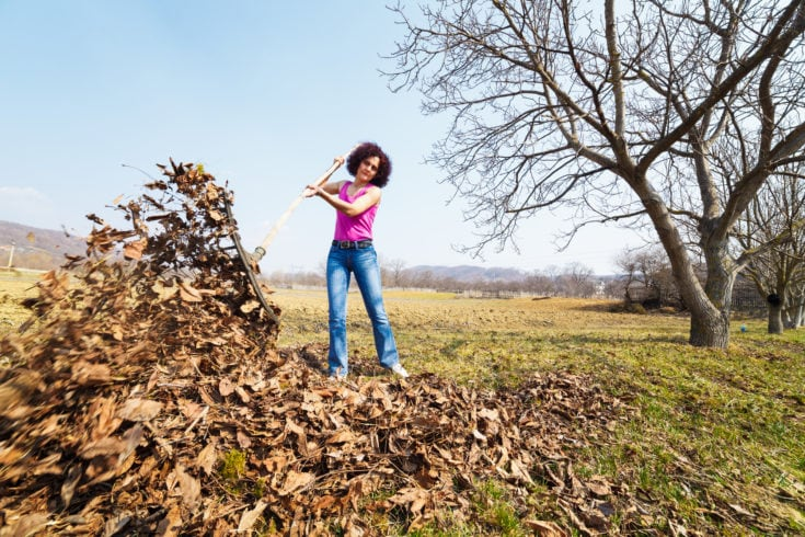 Young woman with a rake spring cleaning in a walnut orchard