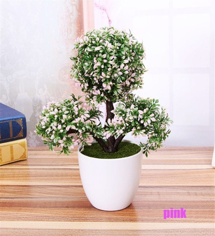Round shaped leaves of indoor bonsai tree planted in a tall rounded white pot