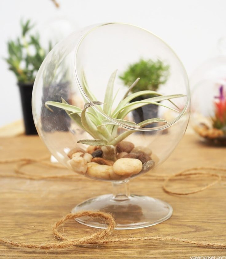 Transparent glass florarium with succulent placed inside along with stones
