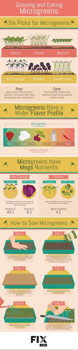 All You Need To Know About Microgreens Infographics