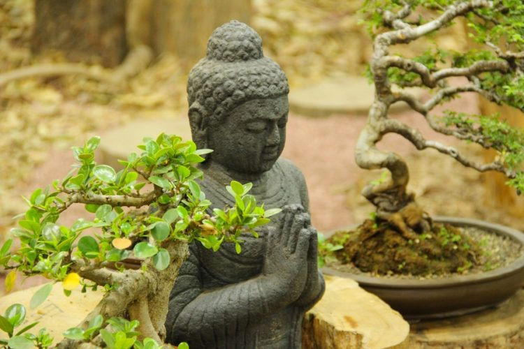 Buddha statue with Bonsai Trees, Bonsai tree exhibition at Pune