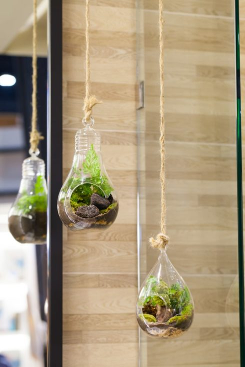 Small garden of terrarium bottle in glass hanging.