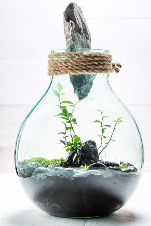 Small live plants in a jar, save the earth concept