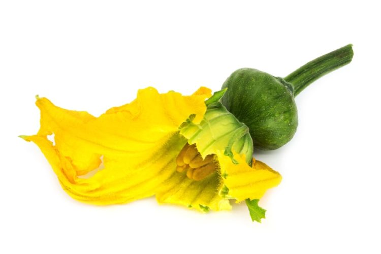 Cucurbitaceae blooming, young plant with yellow flower on white background