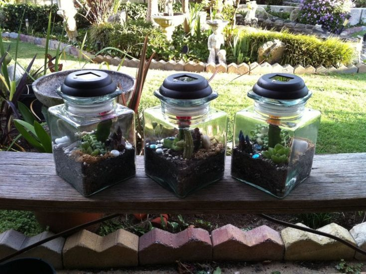 Three transparent glass in a backyard with succulents inside planted in a soil inside