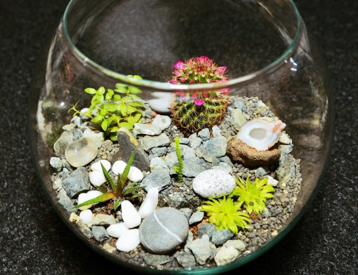 Table top indoor decorative miniature garden in clear glass bubble with cactuses and succulents. Decorative glass vase with succulent and cactus plants. Glass interior terrarium with succulents and cactuses.