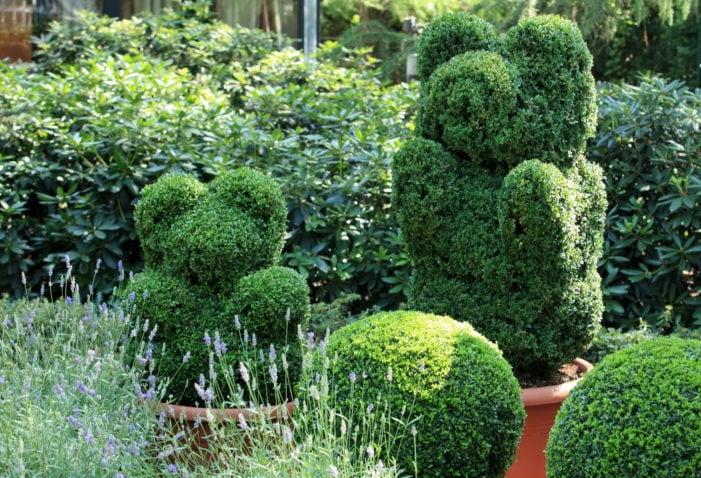 green bear in topiary garden