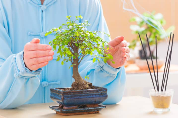 Beautiful woman wearing traditional chinese uniform with bonsai tree