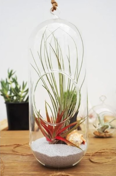 Elongated transparent glass with succulent planted on a white sand inside.