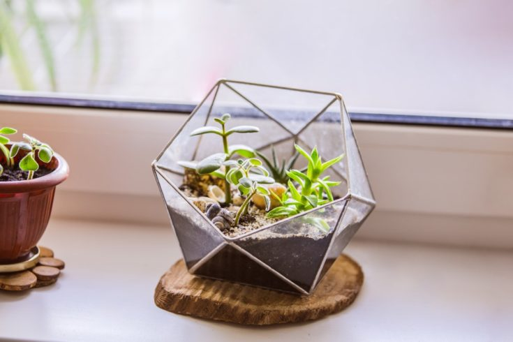 Florarium with succulents. Fashionable geometric glass pot for cacti.