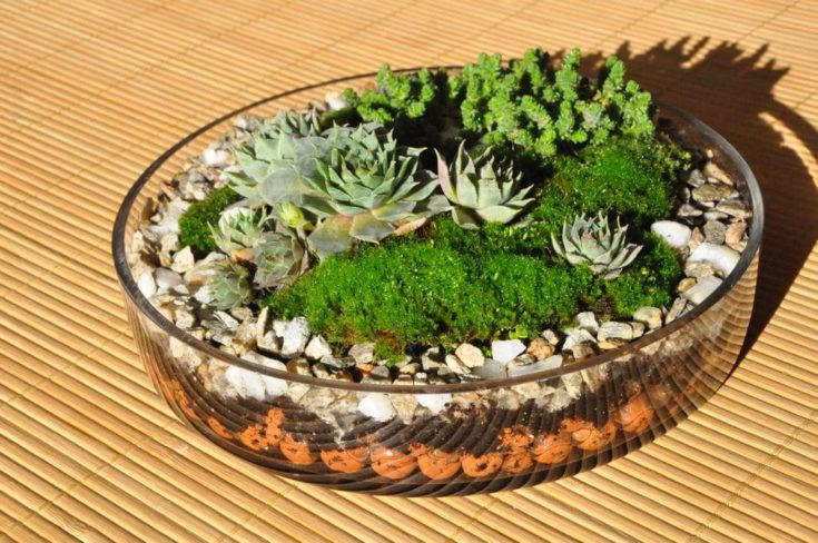 Flat rounded transparent glass with stones inside and several succulents planted