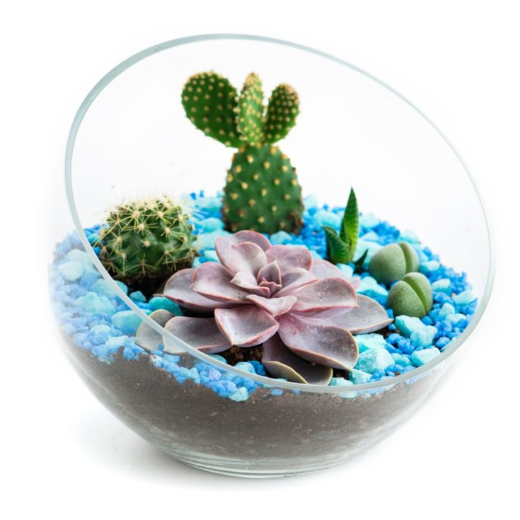 florarium in glass pots with cacti and succulents