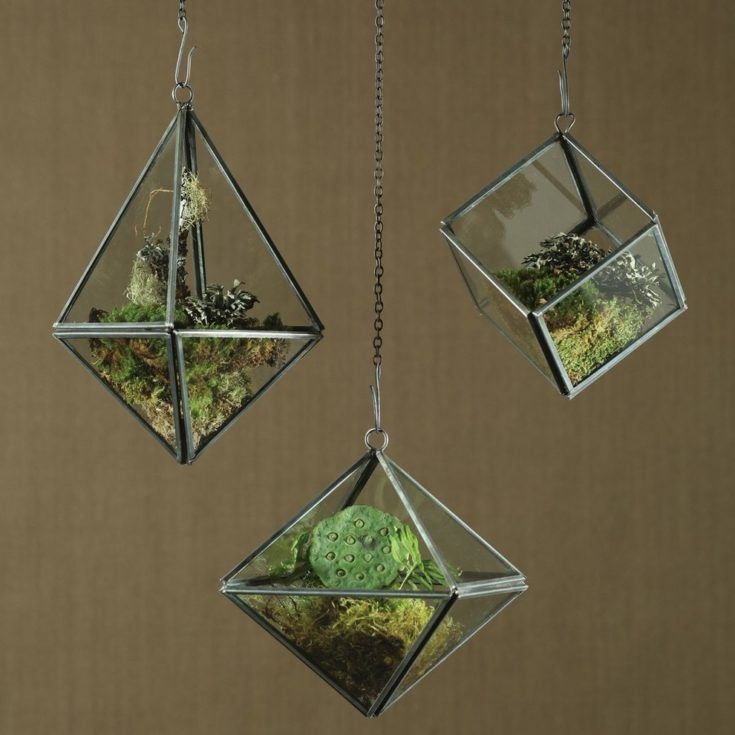 Three hanging terrariums cage with succulents planted inside it