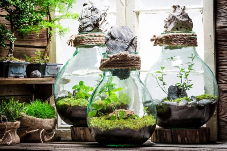 Small rain forest in a jar as new life concept