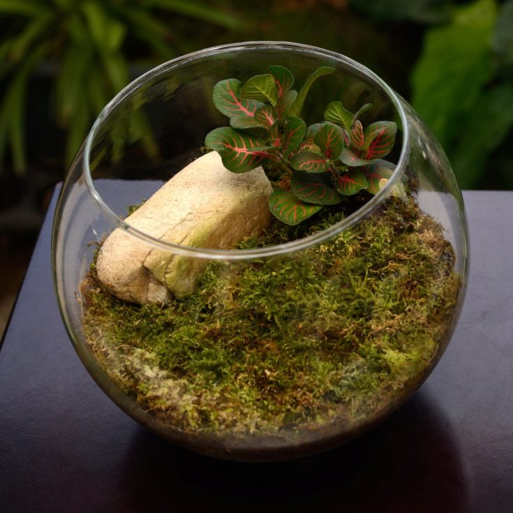 Terrarium, small garden in bottle, look so nice for home decoration.