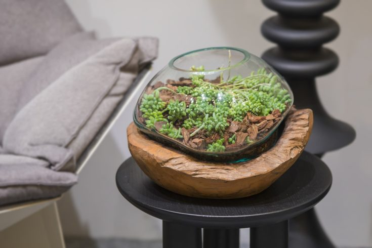 Beautiful glass florarium with succulents and with wooden decor in the interior.