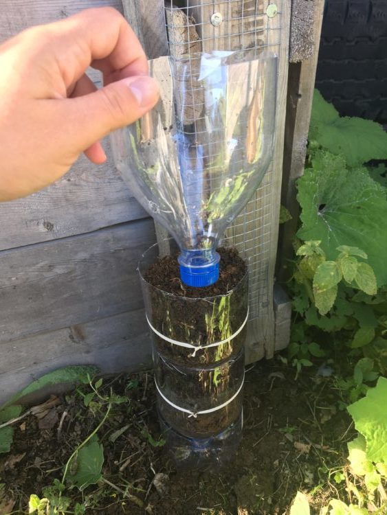 Half bottle added to the 2 layered tower garden bottle.