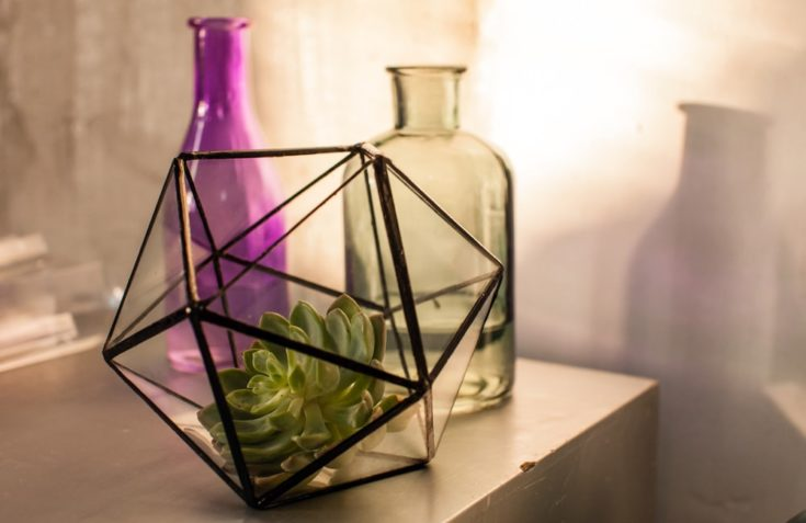 Single succulent plant in a terrarium with two bottles on the background