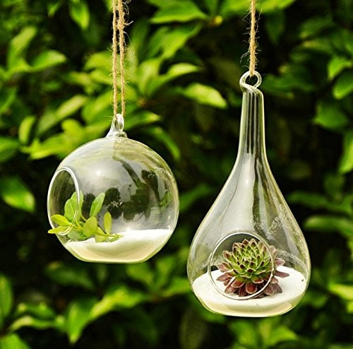 Two transparent glass florarium with succulents inside planted on a white sand