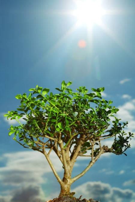 Bonsai expose to sun.