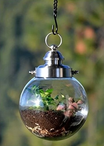 Hanging round transparent glass with plant planted on a soil inside.