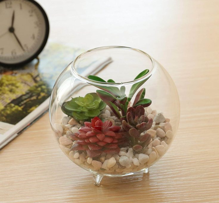 Succulent plant placed inside a round transparent glass with feet along with white little stones
