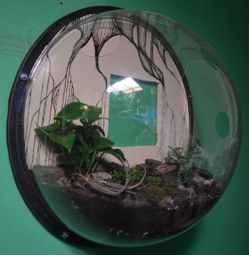 Spherical transparent glass florarium attached to wall with plants planted on soil inside it