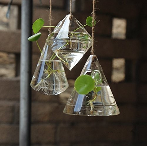 Three hanging transparent glass florarium with plants inside with roots on a water