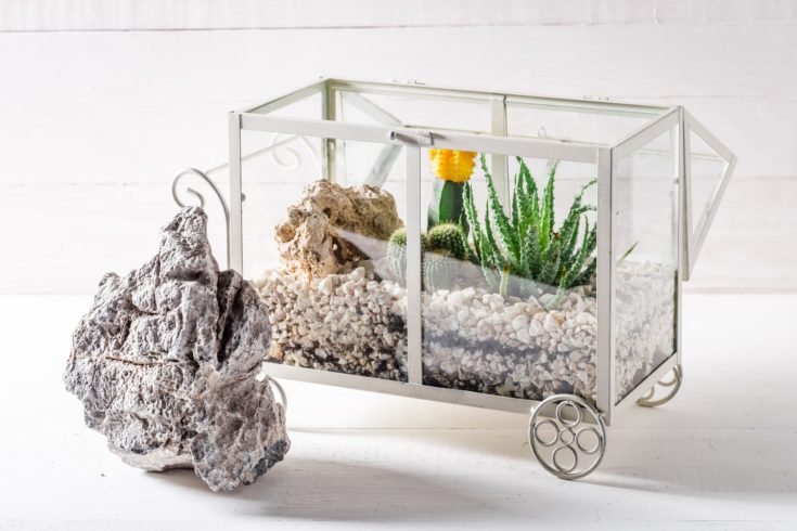 Small terrarium with cactus and piece of desert inside a rectangular transparent glass with wheel