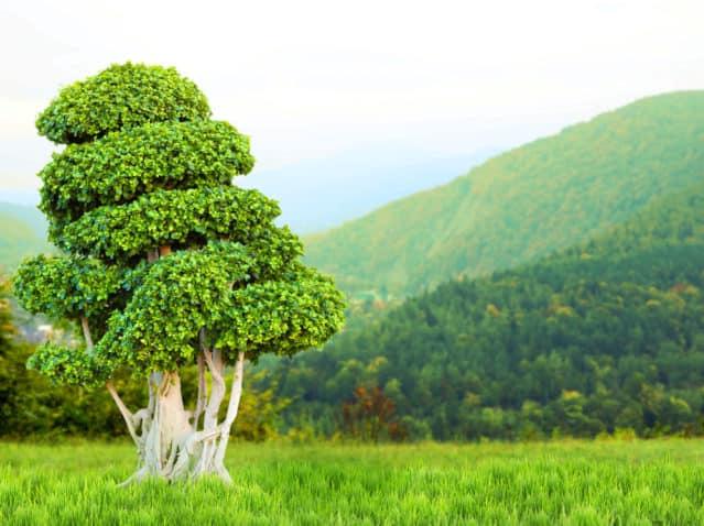 Bonsai tree on beautiful nature background