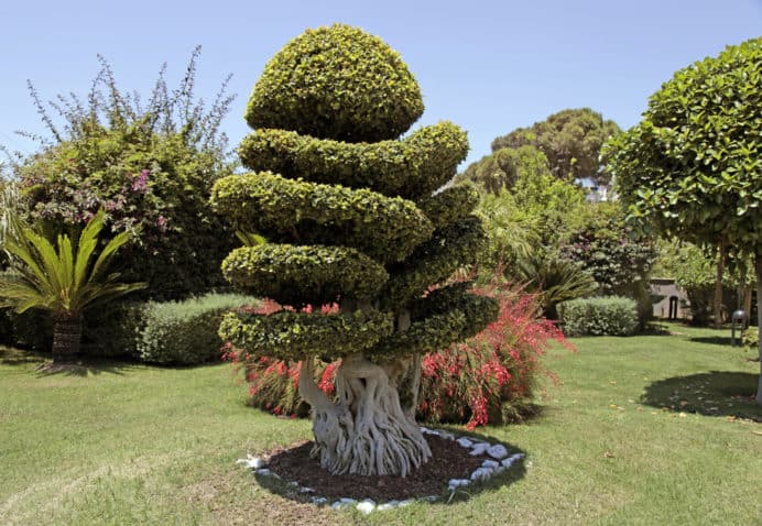 Beautiful natural bonsai tree in the garden, horizontal image