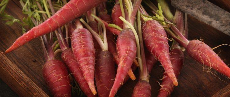 Preparing fresh carrots