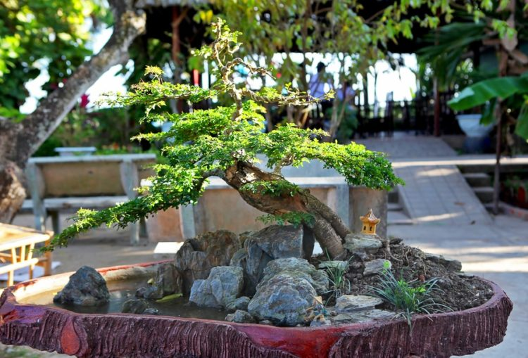 Bonsai style Shakan on the rocks with water and a fisherman and a stone lantern ornaments.