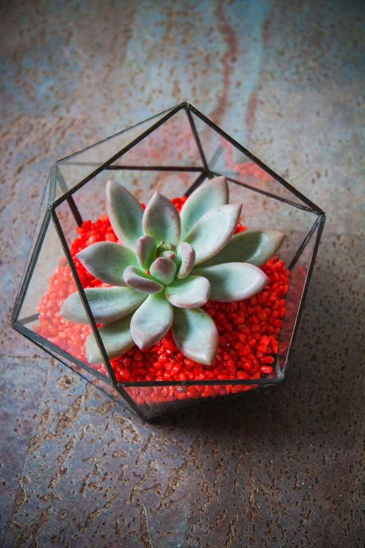 Beautiful geometric glass florarium