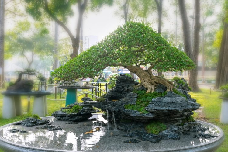 Perfectly shaped bonsai on a rock and small water features.