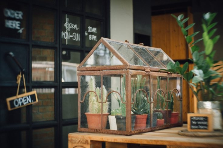 cactus terrarium planting in little glass house