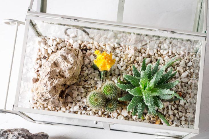 Closeup of cactus in a glass terrarium with self ecosystem