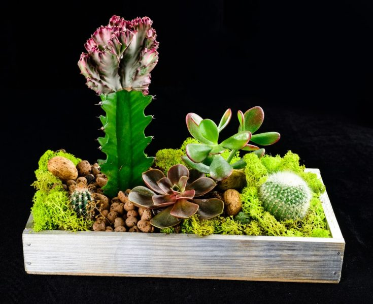 Composition with green succulent Echeveria