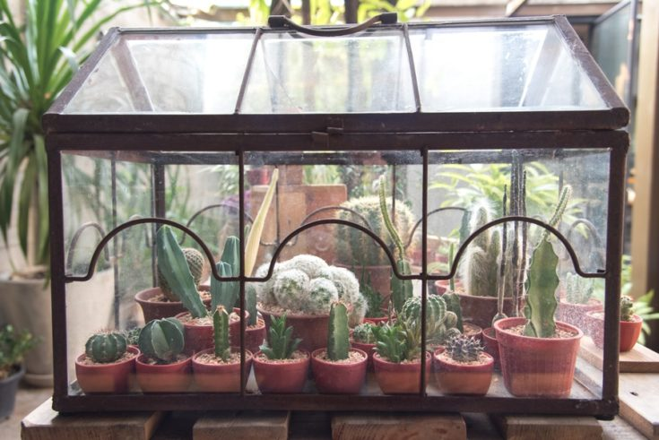 Cute cactus terrarium planting in little glass house