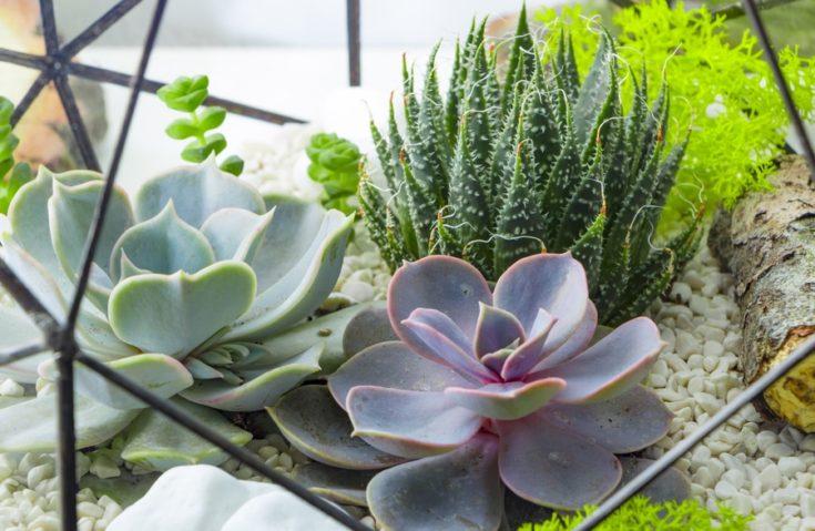 Florarium in the Scandinavian style